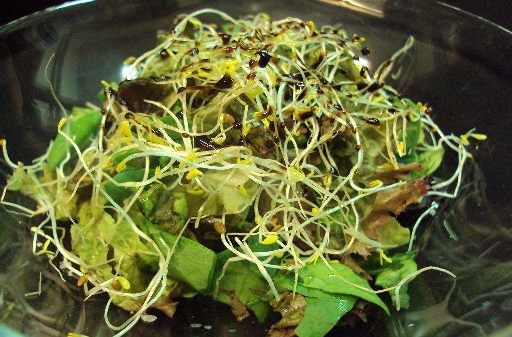 Restaurante Solana: Comer sin preocupaciones